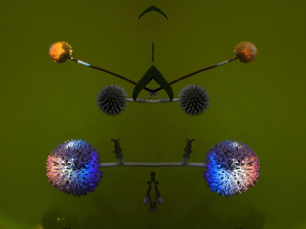 Axe d'asymétrie 5