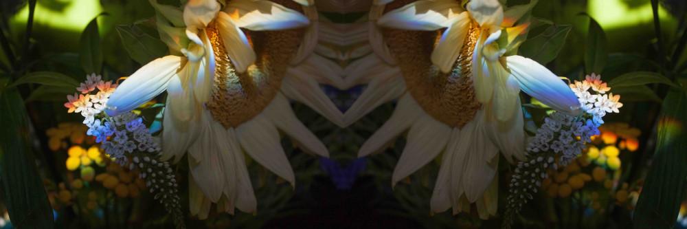 Axe d'asymétrie 16
